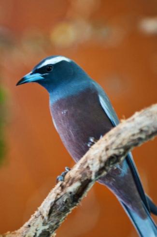 Gorgeous Aussie Bird