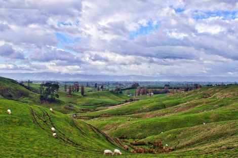 Beautiful Rolling Hills and Sheep