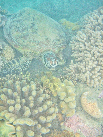 Gorgeous Sea Turtle at Langsford